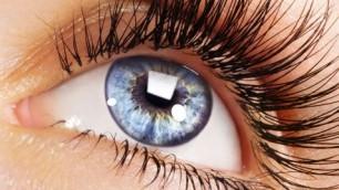 L'œil et la vision