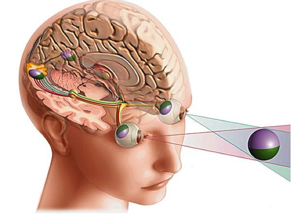Anatomie et fonctionnement de l 39 il dr leininger - Couche du globe oculaire ...