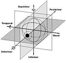 Axes de rotation de l'œil